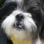 potm_littledog