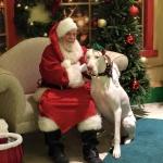 Pets with Santa