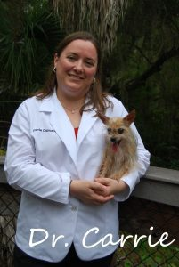 Dr. Carrie Capuano, D.V.M. - Sarasota Animal Hospital